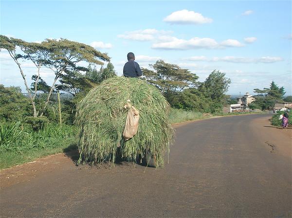 INTRO TO KENYA
