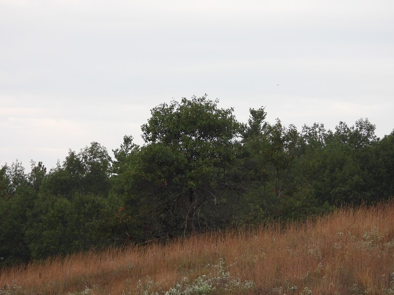 Alderville Black Oak Savanna