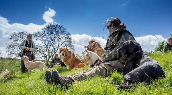 INTERMEDIATE GUNDOG 10/11 MAY 2018