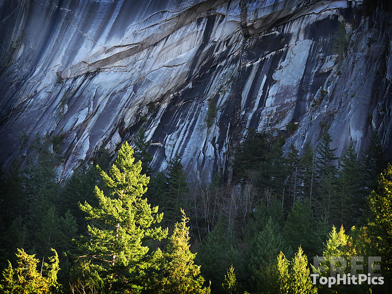 Mountain and Tree View in Squamish, Canada