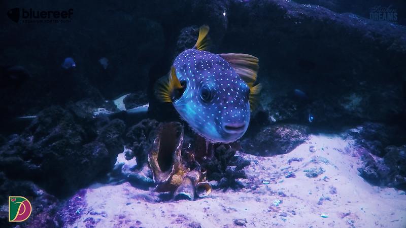 Blue Reef.00_14_01_15.Still016.jpg
