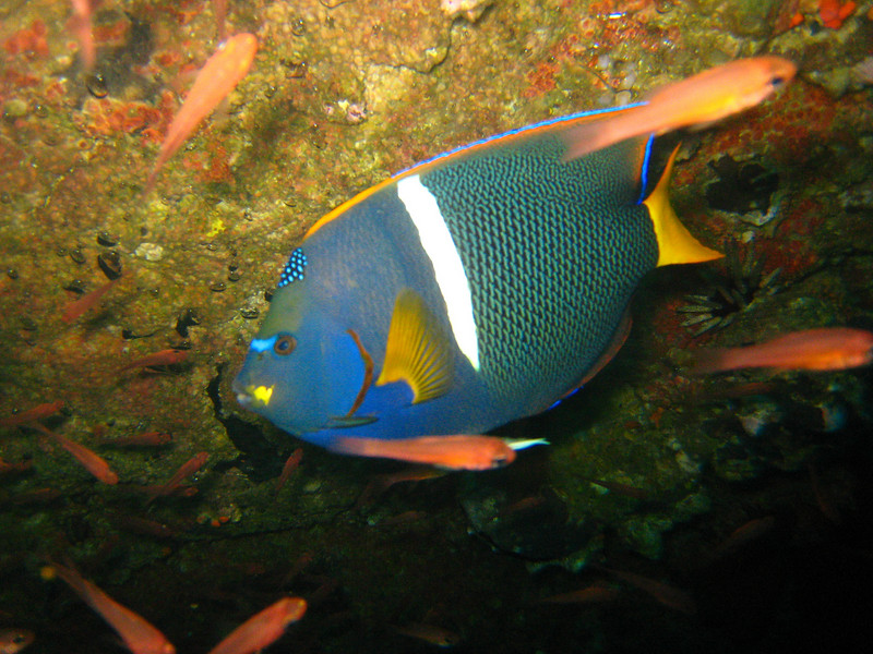 Diving in the Galapagos (364 of 392)