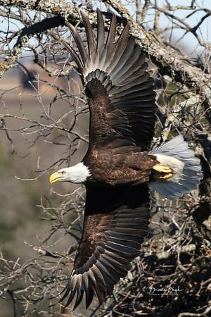Lake Waco Wildlife