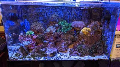 2020-02-18 - Reef Tank Update