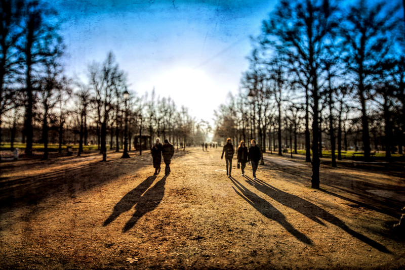 Jardin des Tuileries (Tuileries Garden) in winter, Paris, France. Tilted lens used for shallower depth of field.