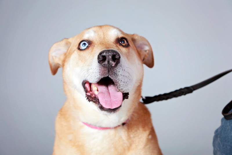 Picture Pawfect - 19 marca 2017 - 226-1.jpg