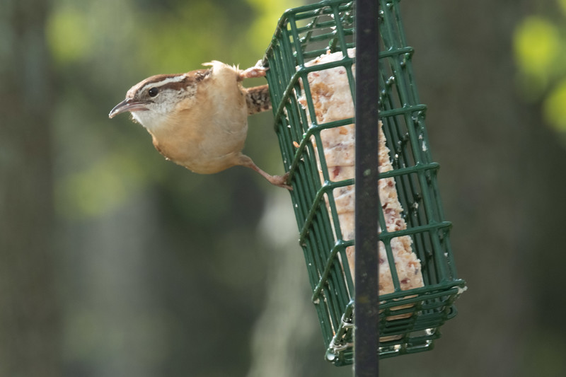 birdfeeder-7167.jpg