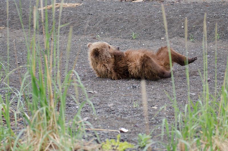 Alaska-8319.jpg