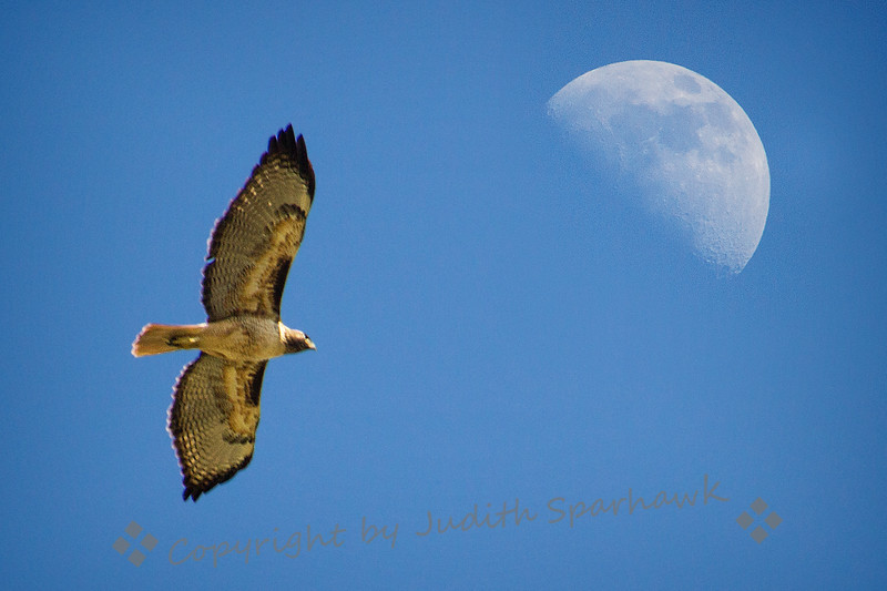Soaring for the Moon