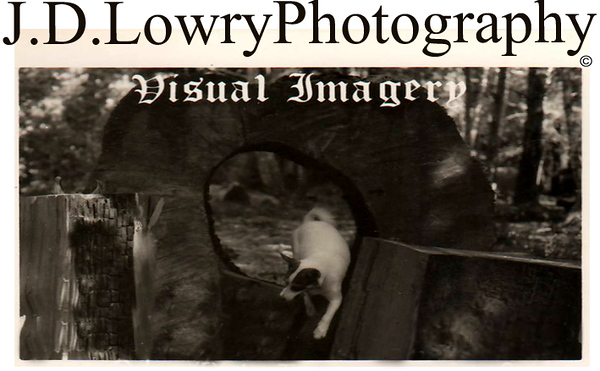 JD Lowry Photography Header Image