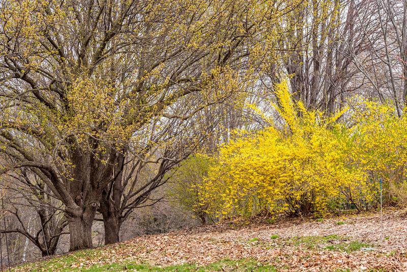 Arboretum_2019May2_1-4705.jpg