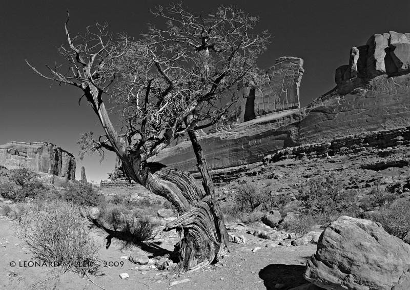 Juniper Park Avenue - Arches National Park - Utah 12 image multi-row panorama, Nodal Ninja 3, PT gui stitching, Photoshop