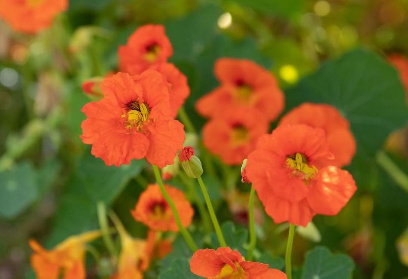flowers-9987.jpg