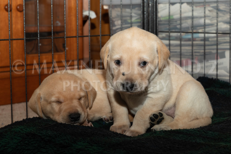 Weika Puppies 2 Mar 2019-8494.jpg