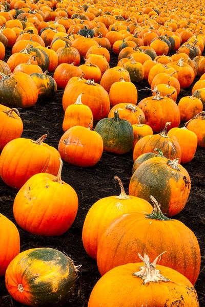 Pumpkins, Half Moon Bay, California, 2010