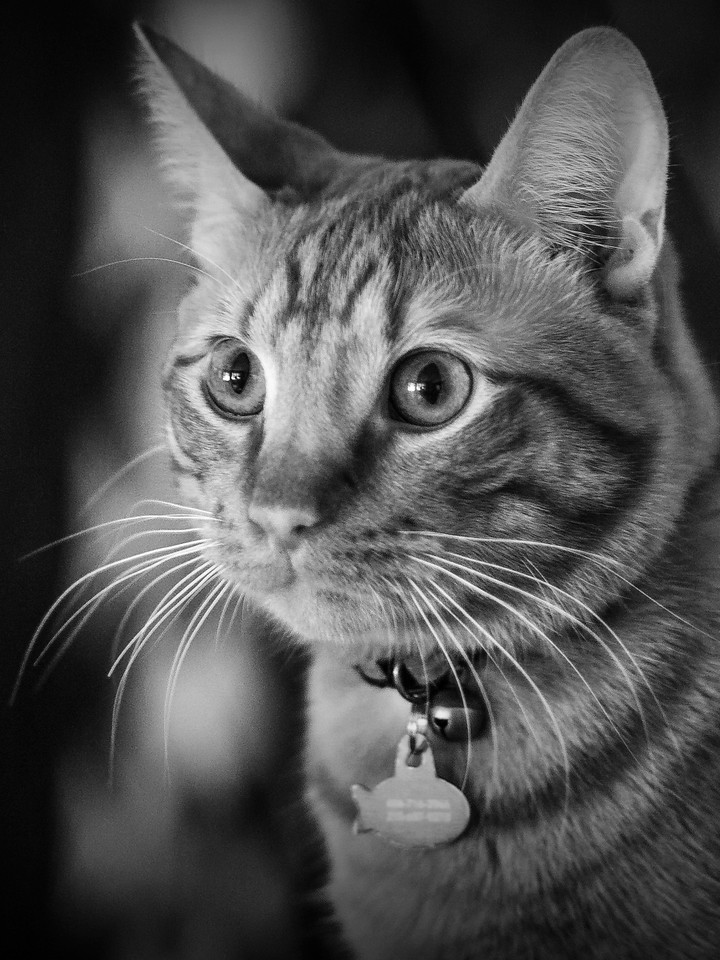 小花猫,别动拍照