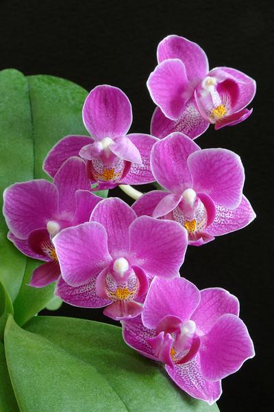 Orchid (3).jpg