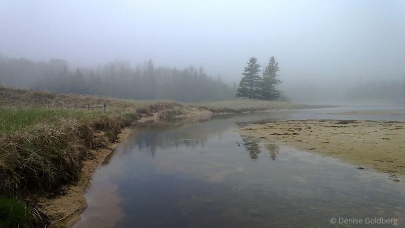 a foggy day, behind Sand Beach, Acadia National Park
