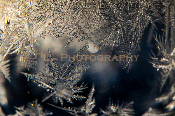 011419 hoarfrost and rime frost ID