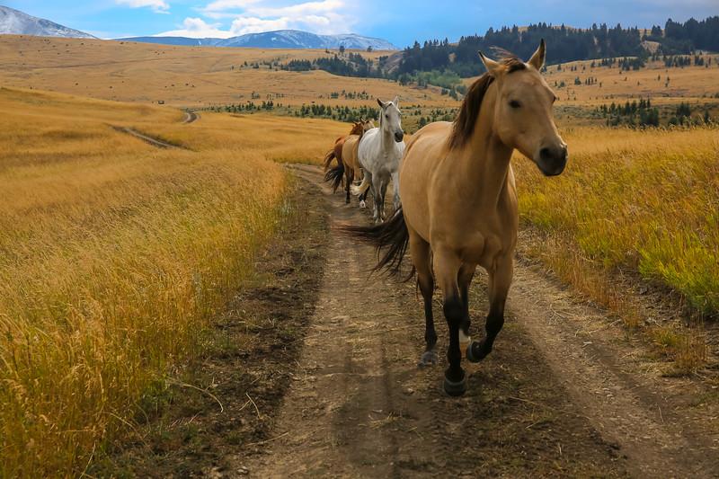 Horses 18.jpg