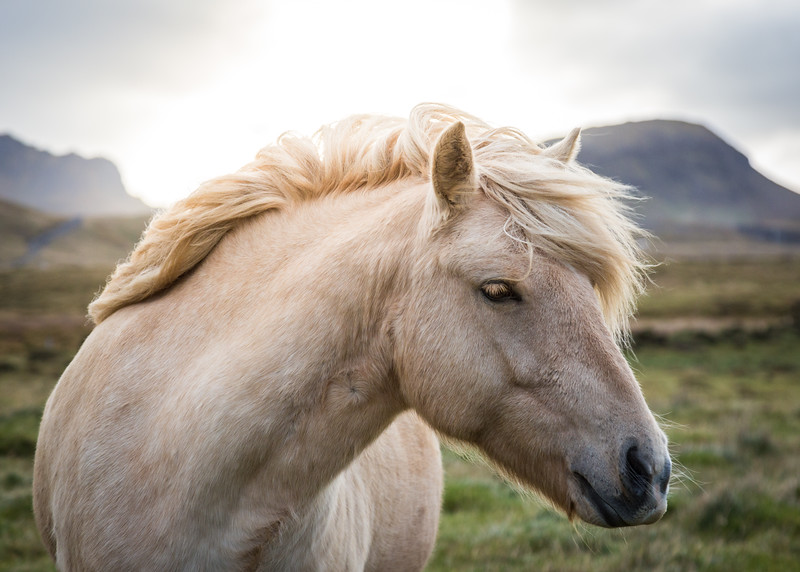 9755-Iceland-Paul-Hamill.jpg