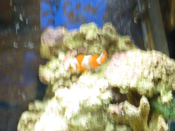 18 Gallon Reef restart