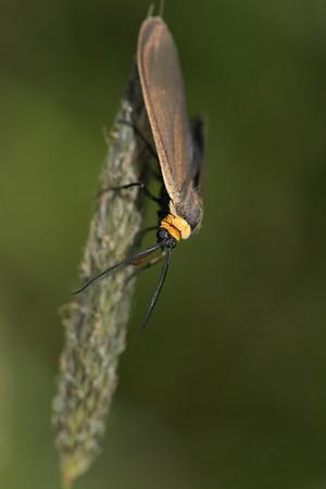 Invertebrates - Terrestrial