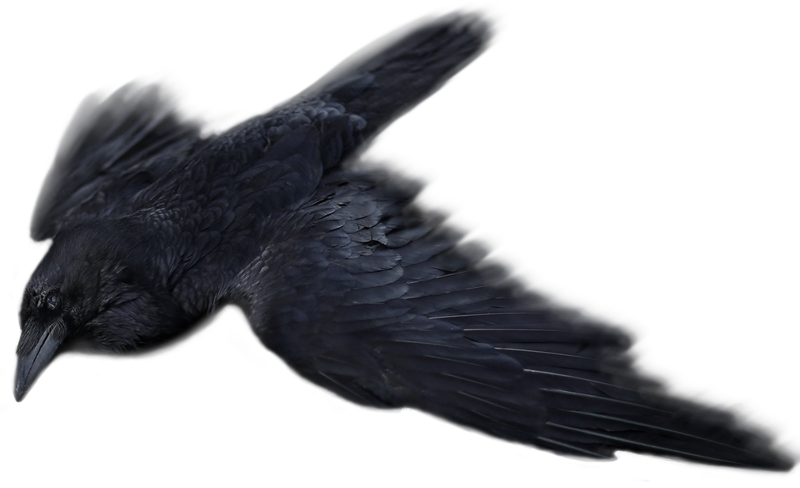 Raven 1.png
