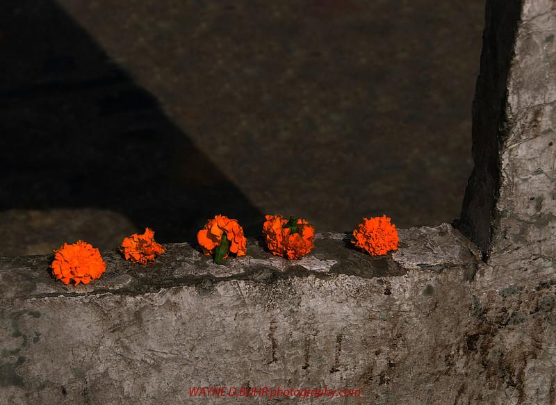 INDIA2010-0202A-207A.jpg