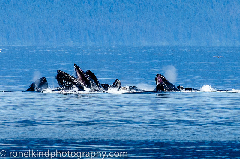 Whales-0105-9.jpg