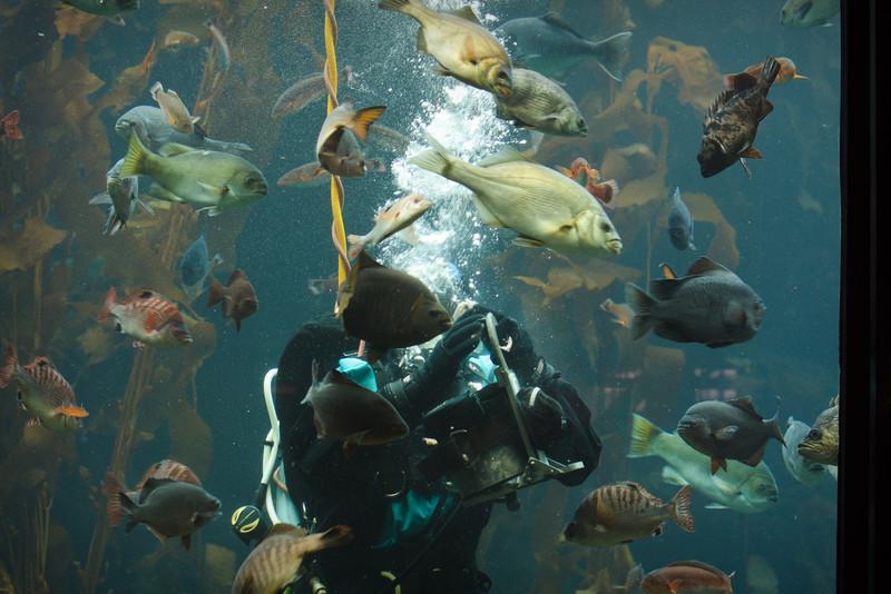 Monterey Bay Aquarium-2567.jpg