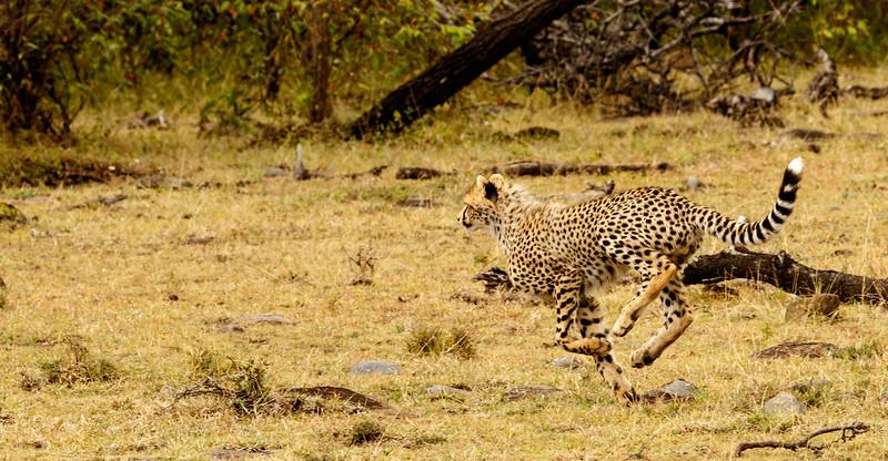 Kenya 2015-09049.jpg