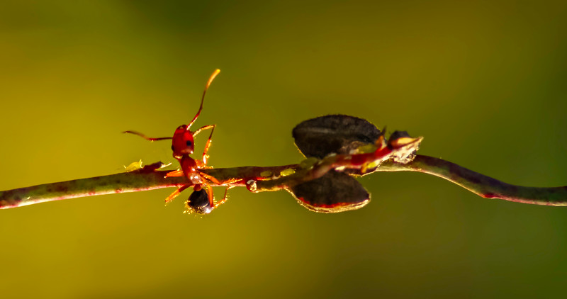 Bugs and Beetles - 134.jpg