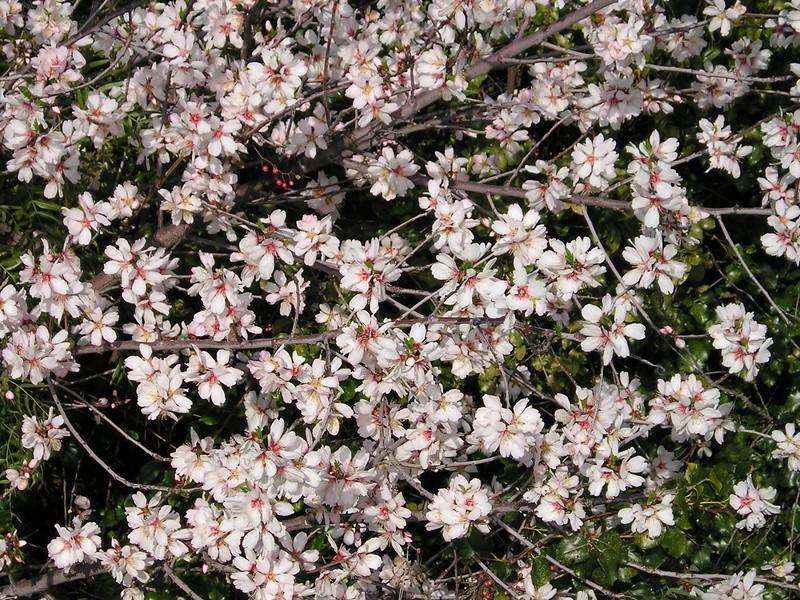 Close-up of flowering shrub.