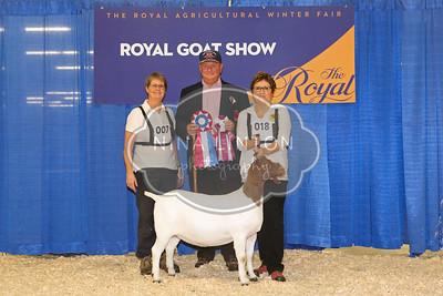 RAWF Boer Goat Show Champions 2017