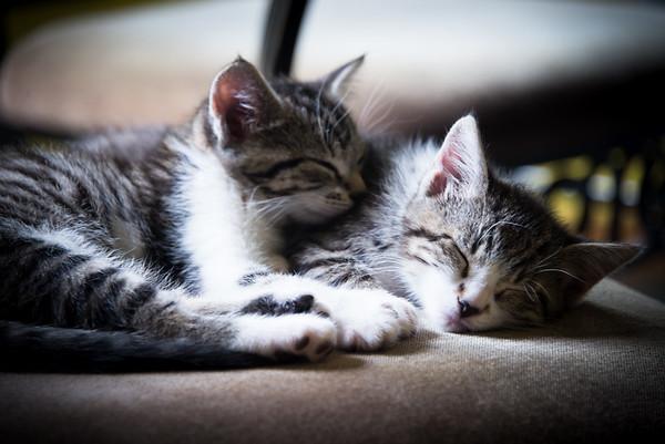 Kittens June 2016