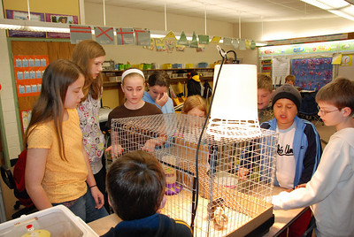 Third Grade Chicks 2009