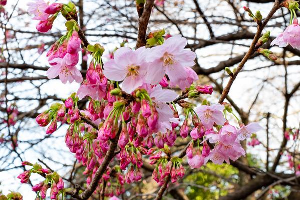 Sakura 2019 03 start