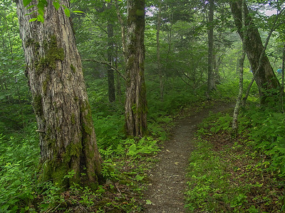 Forest trail in Chignecto Park