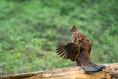 new wildlife and hunting images from Lon