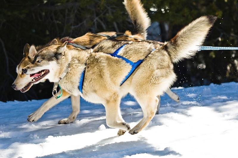 DogSled-144.jpg