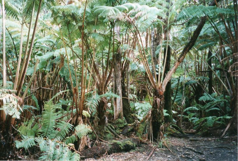 199805-hawaii-05101.jpg