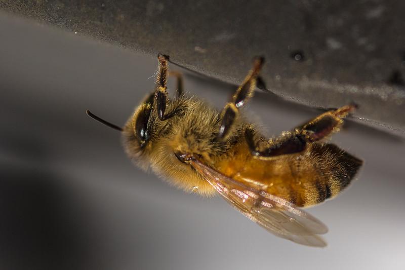honeybeefeb21.jpg