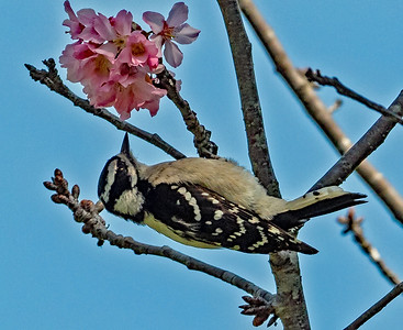 4-8-2018 HUMMING BIRDS