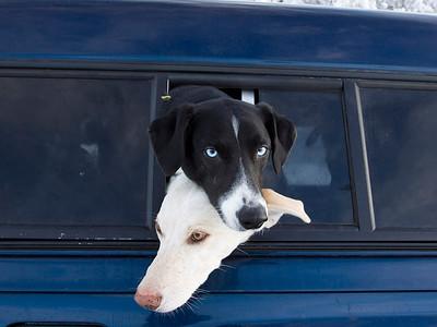 6 Dog Race