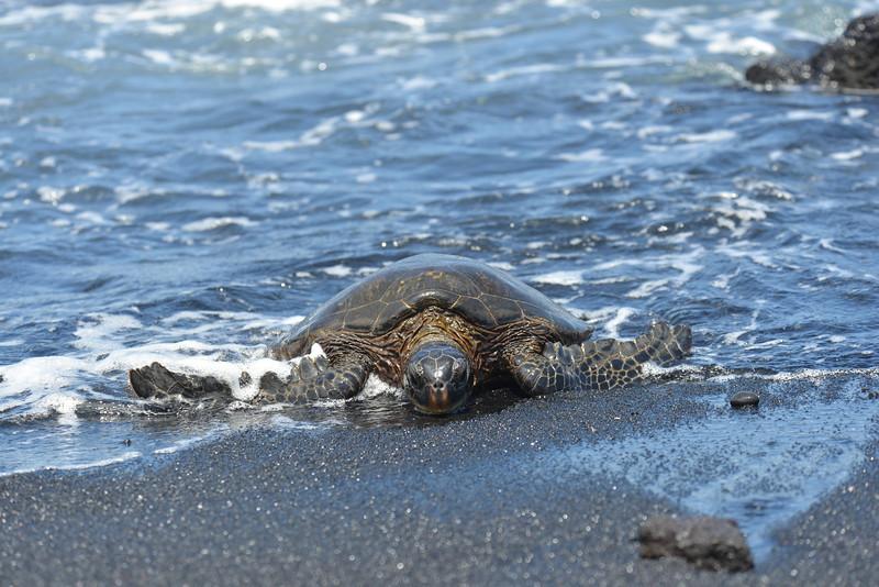 Big Island - Hawaii - May 2013 - 20.jpg