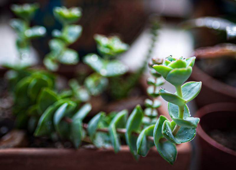 succulent 050320-2936.jpg