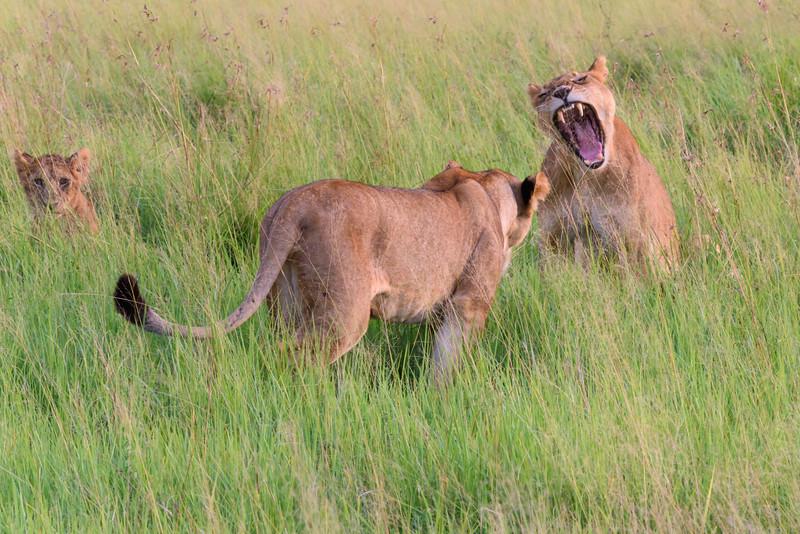 20160210_0027_Serengeti_Day2.jpg