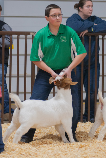 kay_county_showdown_goats_20191207-26.jpg