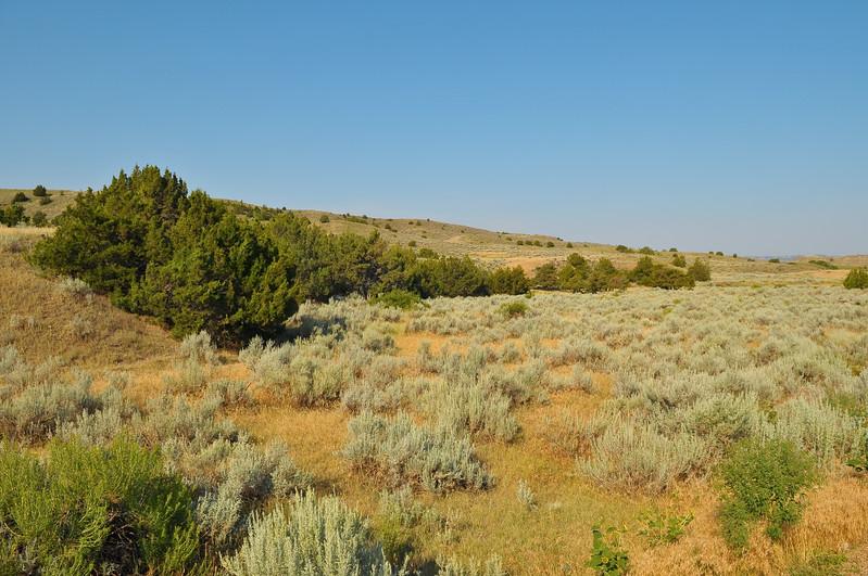 Near the Powder River, Montana